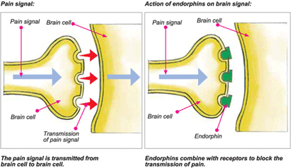 synapse function